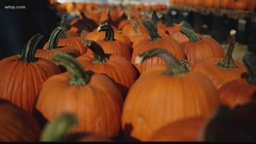Get up, Get out: Gallagher's Pumpkins