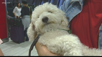 Alternatives to comfort animals to combat fear of flying