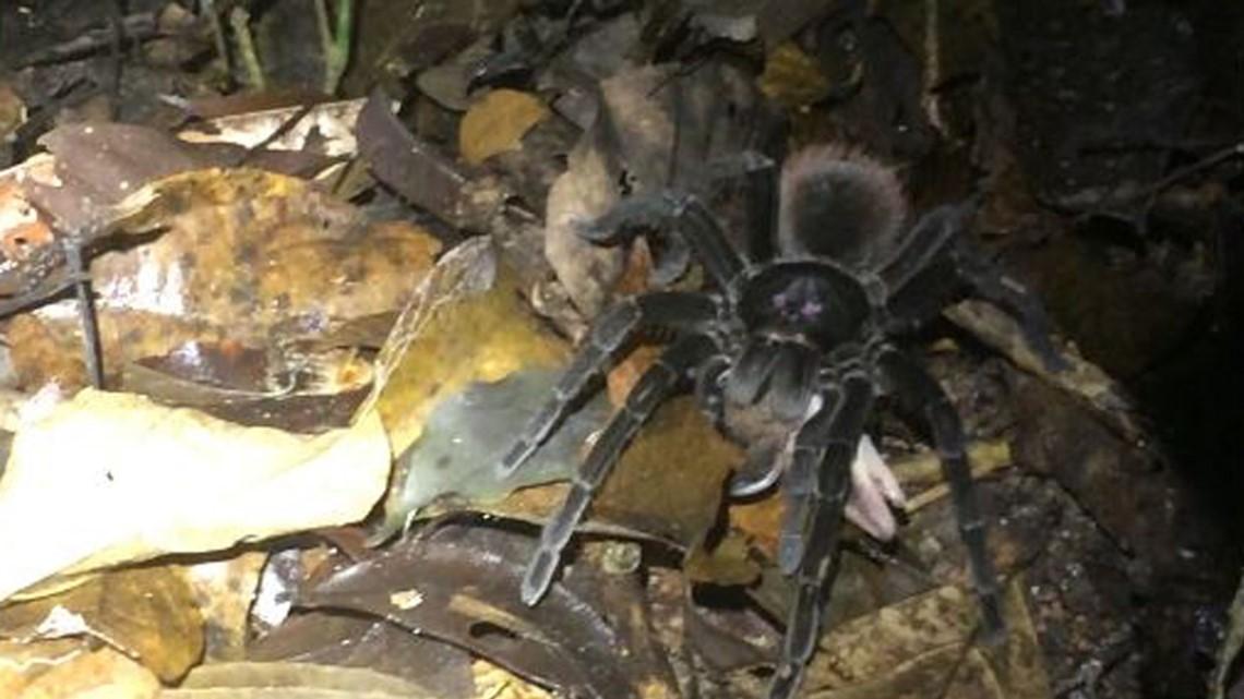 Gas Prices Tampa >> Spider vs. opossum: Researchers capture bizarre scene ...