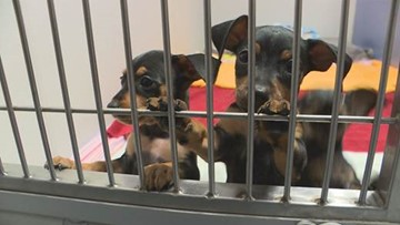 'There's nowhere for them to go': Animal advocates push for no-kill shelters amid overcrowding