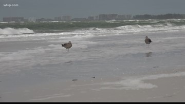 Dangerous sea foam carrying red tide toxins washes ashore