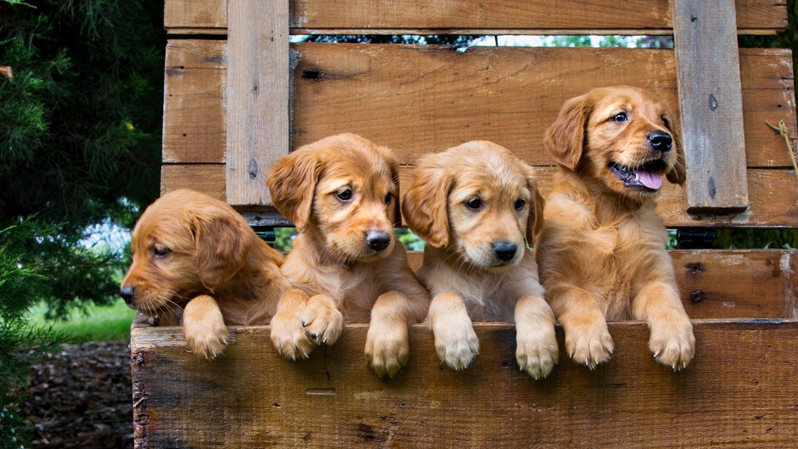 Manatee commissioners consider banning retail sale of puppies