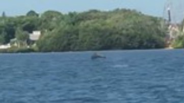Playful dolphin puts on performance for 'self-isolating' Tampa couple