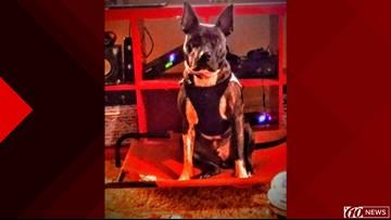 Service dog found safe after car accident