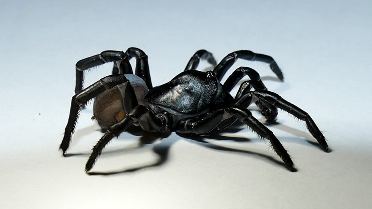 South Florida zoo credited with discovering new spider species