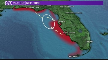 Researchers link red tide bloom to ocean currents
