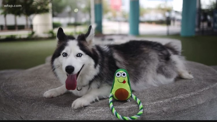 How a dog toy is giving back in more ways than one!