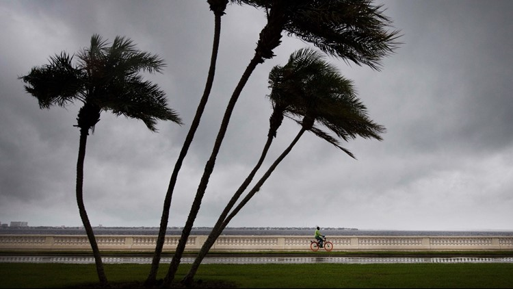 Protecting your trees and your pocketbook for hurricane season