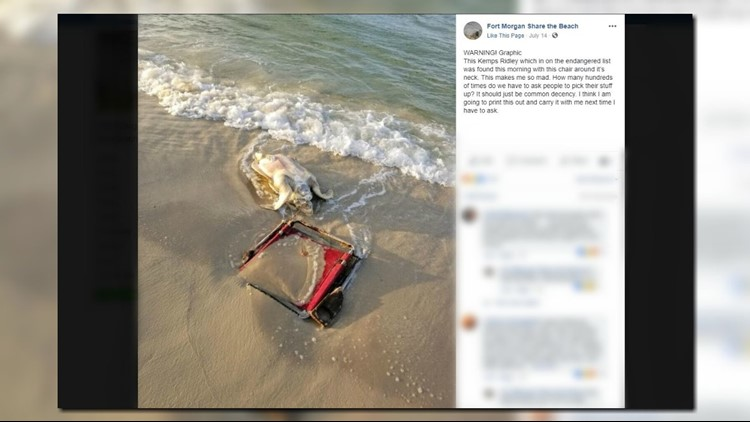 The Fort Morgan Share The Beach Conservation Group In Alabama Shared A  Photo Of A Sea