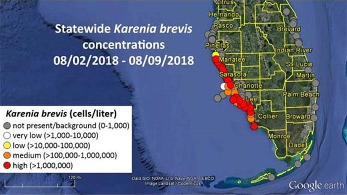 Red Tide Forecast Toxic Algae To Persist Move Southeast From