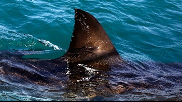 Florida is still the shark bite capital of the world