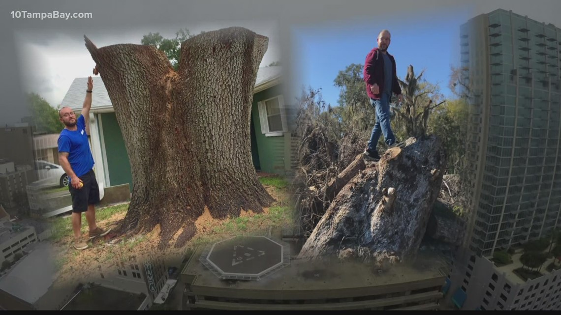 Hurricane season kicks off tree salvage season for Tarpon Springs furniture maker