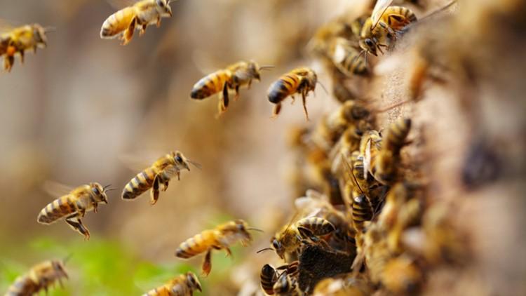 Risultati immagini per bees
