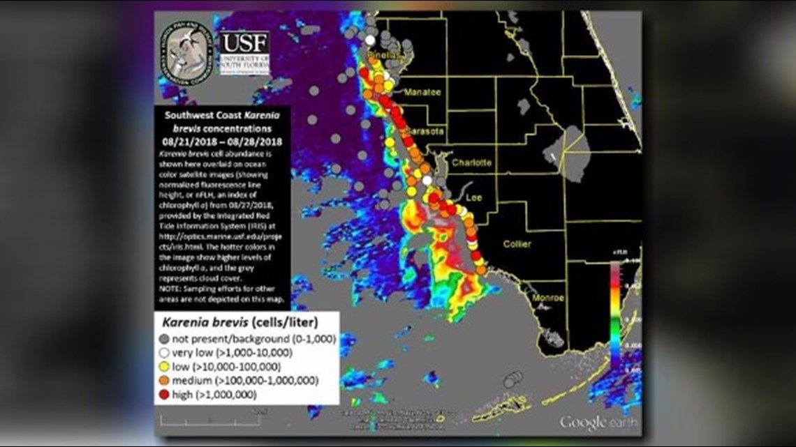 High Concentrations Of Red Tide Found 10 Miles Off Coast Of Pinellas