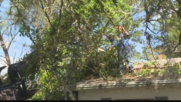 Large trees damage Spring Hill home during storm