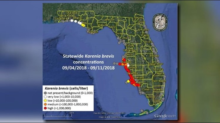 Red tide reaches the Florida Panhandle, as problems persist ...
