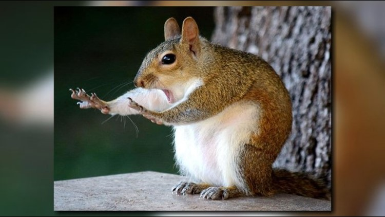 Brandon woman's hilarious squirrel photo brings home high honors