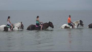 See Tampa Bay beaches on horseback