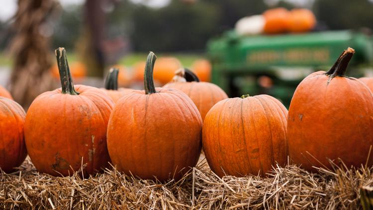 Top 10 must-know signs of fall in Florida | wtsp.com