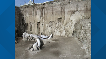 14 mammoth skeletons found in 15,000-year-old man-made traps