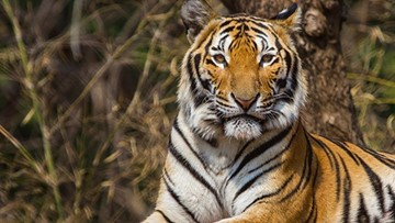 6 tigers removed from Dade City Wild Things after PETA wins lawsuit