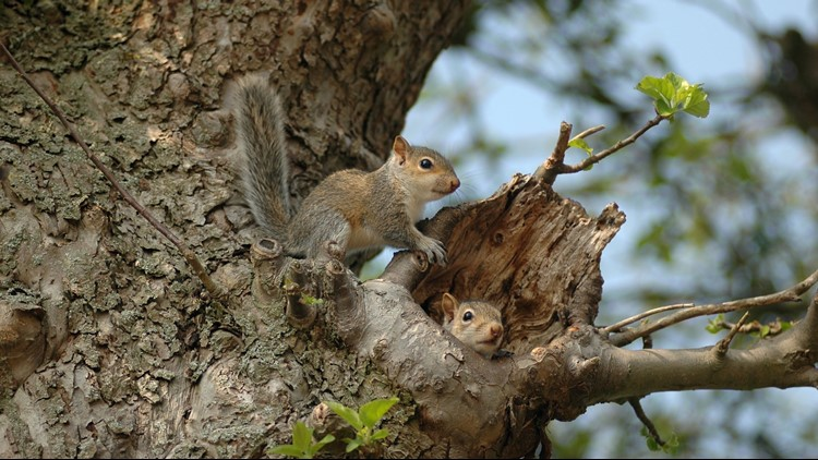 Social distancing is inspiring people to build tiny picnic tables for squirrels