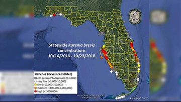 Higher concentrations of red tide found in Pinellas, Manatee and Sarasota counties