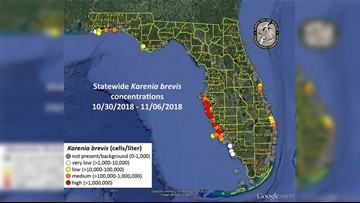 High red tide concentrations still present in Tampa Bay area