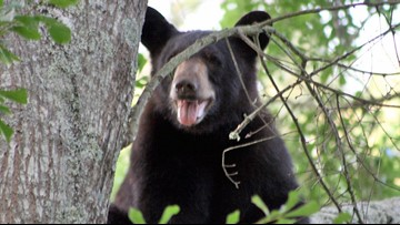 78-year-old North Carolina man says he punched mama bear in the nose