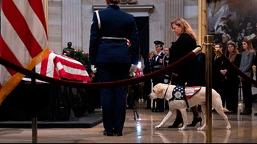 Service dogs like President George H. W. Bush's Sully can be life-changing for handlers