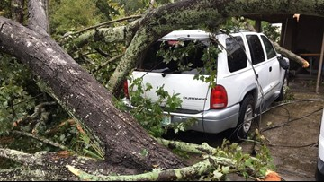 Tornado with 100-mph winds downed trees in New Port Richey this morning, NWS confirms
