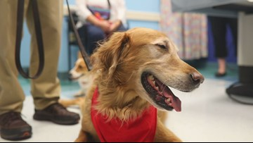 Therapy dog celebrates 300th visit
