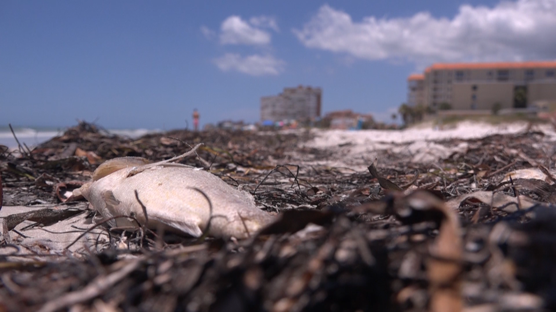 UF researcher studies ways to reduce red tide - WTSP.com
