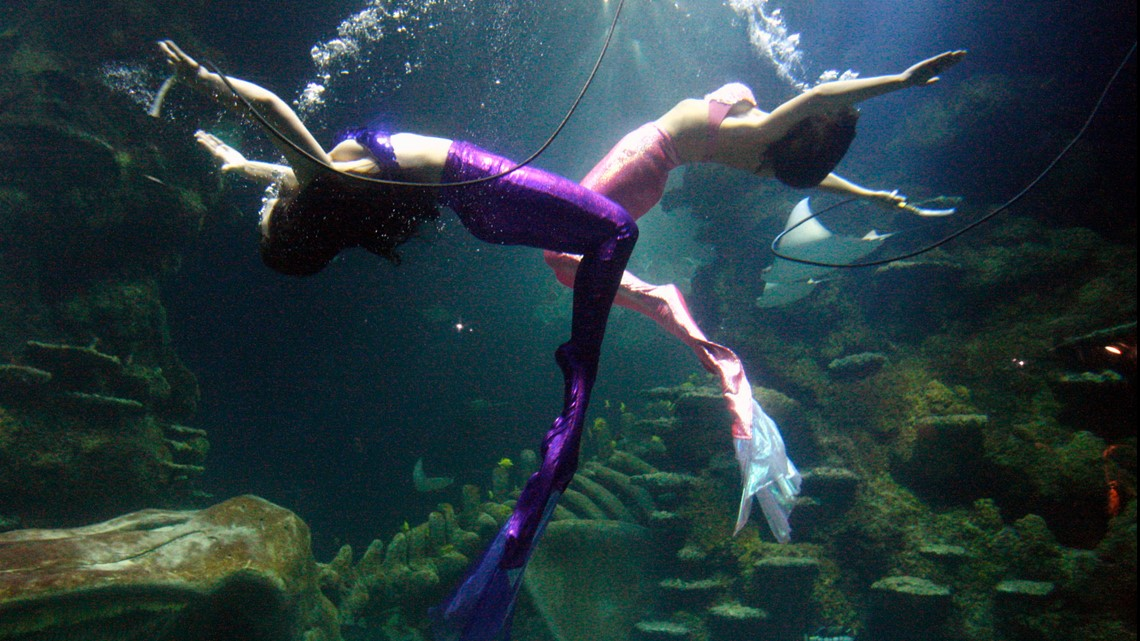 Want to be a mermaid? Weeki Wachee Springs is holding auditions