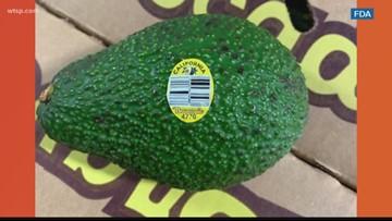 Avocados recalled for potential listeria contamination | 10News WTSP