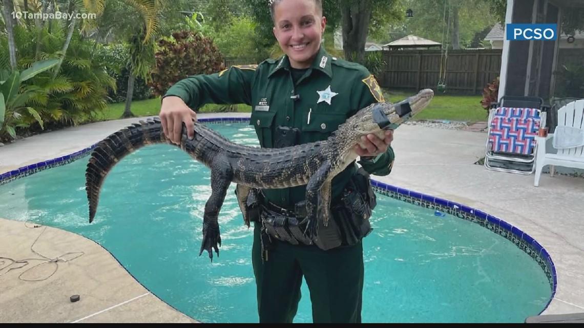 Pinellas County deputy kicks alligator out of pool