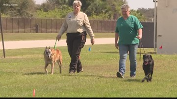 Cadaver dog search begins for lost African American cemetery that could be at MacDill AFB