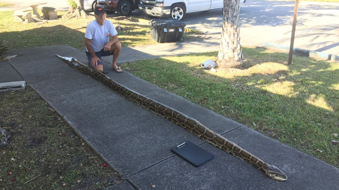 For heaven's snakes! 18-foot python captured in Everglades