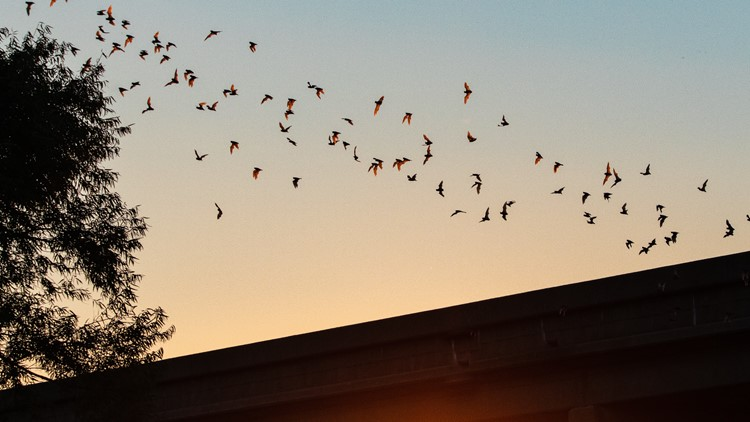 Going batty over insect control: Hillsborough County to install new bat houses