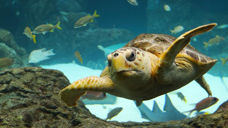 Protect the nest: Sea turtle nesting season begins soon