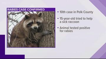 15 year old boy bitten by rabid raccoon in Polk County