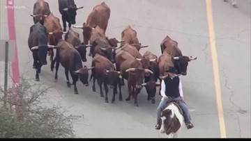 Wow Moments: Salvation Army kicks off 'Cattle Drive for the Kettle Drive'