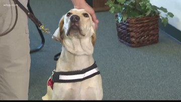 Service dog joins Winter Haven police