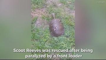 Paralyzed tortoise gets wheels