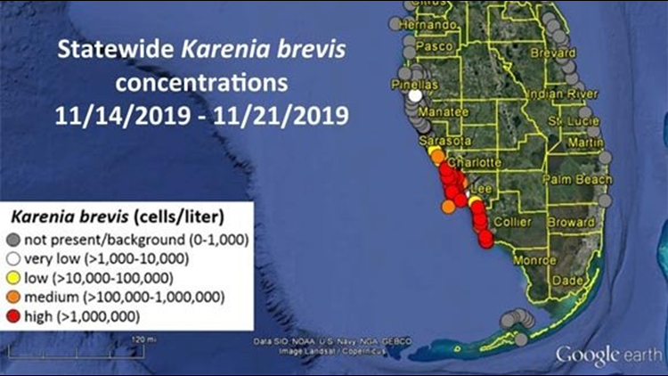 Red tide continues to plague gulf coast