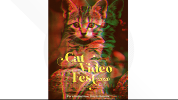 CatVideoFest 2020 coming to Tampa Theatre