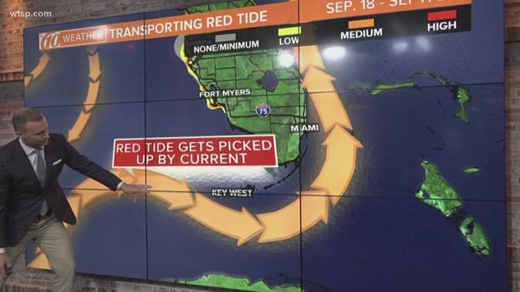 Ocean Currents Transport Red Tide To Floridas Atlantic Coast Wtsp