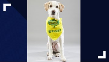 Meet Harper, Suncoast Animal League's player in this year's Puppy Bowl XV