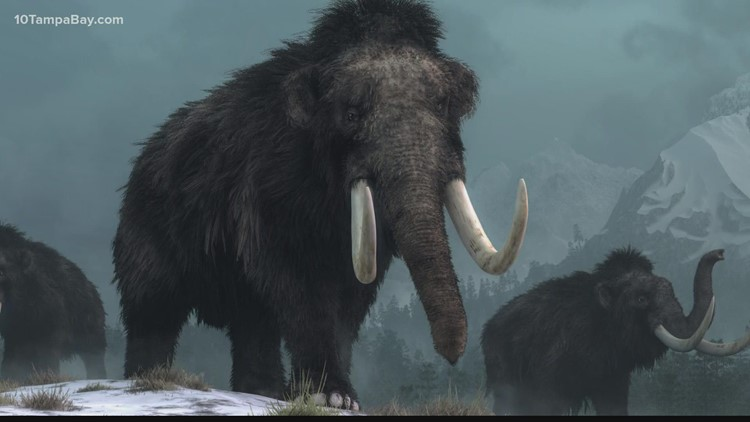 A new company is trying to bring the Woolly Mammoth back from extinction