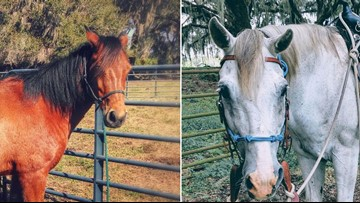 Someone stole two horses, and Polk deputies are asking for your help